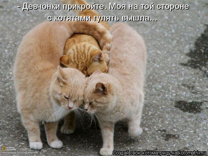 Котоматрица: - Девчонки прикройте. Моя на той стороне  с котятами гулять вышла...