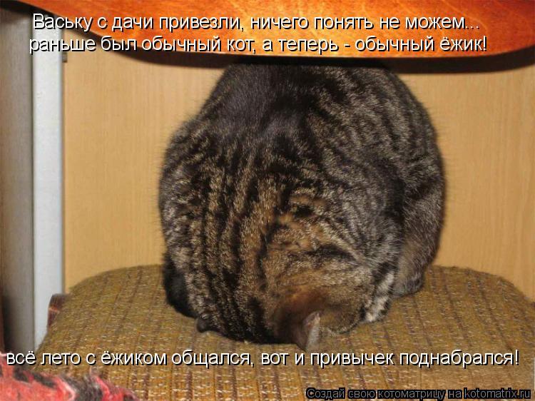 Котоматрица: Ваську с дачи привезли, ничего понять не можем... раньше был обычный кот, а теперь - обычный ёжик! всё лето с ёжиком общался, вот и привычек под