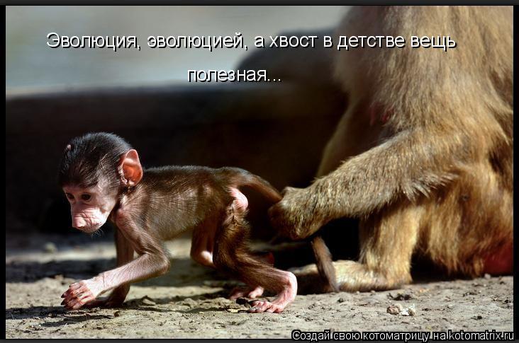 Котоматрица: Эволюция, эволюцией, а хвост в детстве вещь полезная...