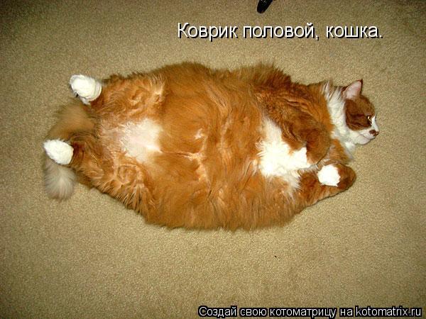 Котоматрица: Коврик половой, кошка.