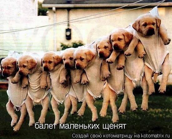 Котоматрица: балет маленьких щенят