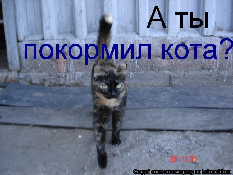 Котоматрица: А ты покормил кота?
