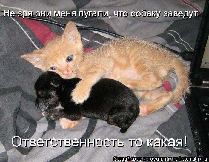 Котоматрица: Не зря они меня пугали, что собаку заведут. Ответственность то какая!