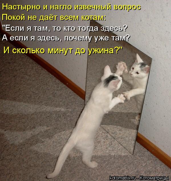 """Котоматрица: Настырно и нагло извечный вопрос Покой не даёт всем котам: """"Если я там, то кто тогда здесь? А если я здесь, почему уже там? И сколько минут до у"""