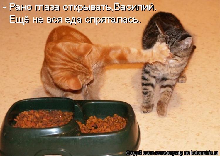 Котоматрица - - Рано глаза открывать,Василий. Ещё не вся еда спряталась.