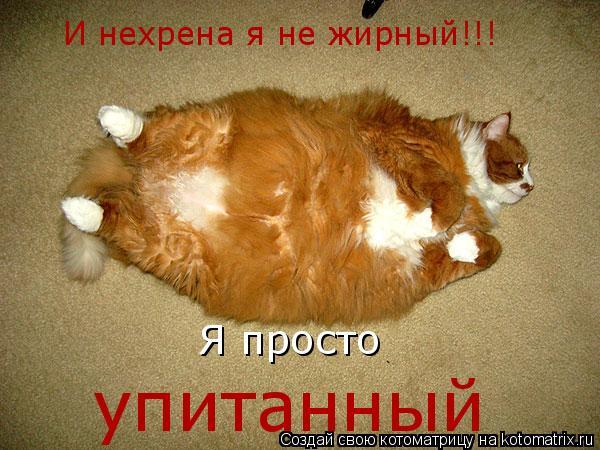 Котоматрица: И нехрена я не жирный!!! Я просто упитанный