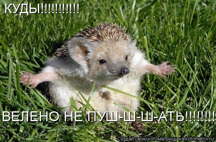 Котоматрица: КУДЫ!!!!!!!!!!! ВЕЛЕНО НЕ ПУШ-Ш-Ш-АТЬ!!!!!!!!!!!!!!!