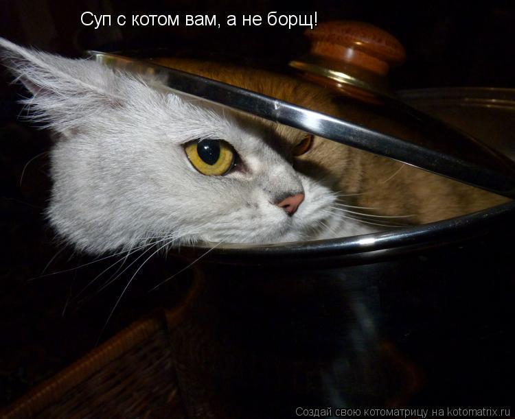 Котоматрица: Суп с котом вам, а не борщ!