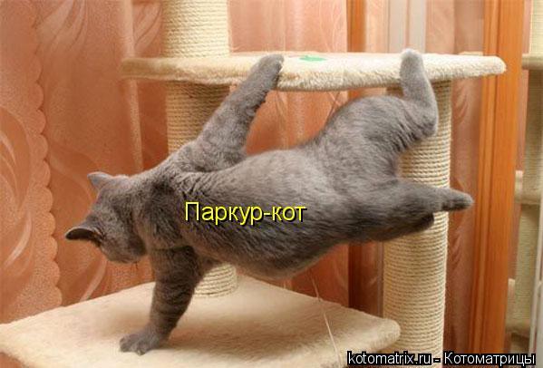 Котоматрица: Паркур-кот