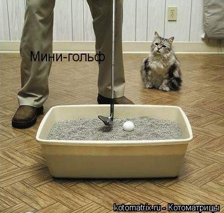 Котоматрица: Мини-гольф