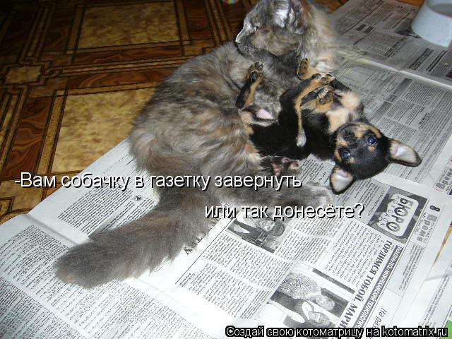 Котоматрица - -Вам собачку в газетку завернуть или так донесёте?