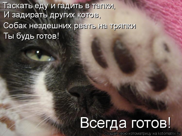 Котоматрица: Таскать еду и гадить в тапки,  И задирать других котов, Ты будь готов! Всегда готов! Собак нездешних рвать на тряпки