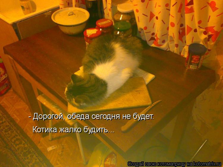 Котоматрица: - Дорогой, обеда сегодня не будет. Котика жалко будить...