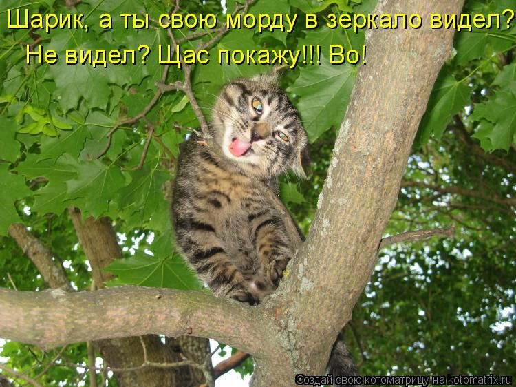 http://kotomatrix.ru/images/lolz/2011/05/01/897562.jpg