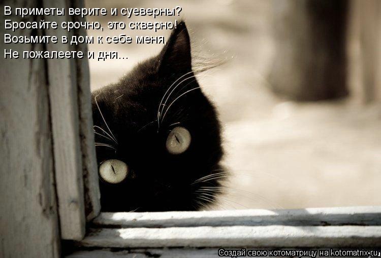 Котоматрица: В приметы верите и суеверны? Бросайте срочно, это скверно! Возьмите в дом к себе меня, Не пожалеете и дня...