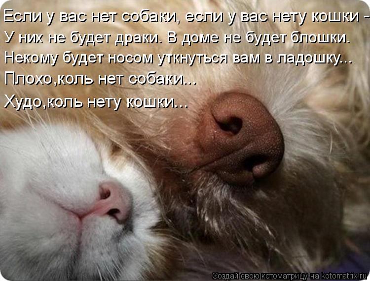 Котоматрица - Если у вас нет собаки, если у вас нету кошки - Некому будет носом уткн