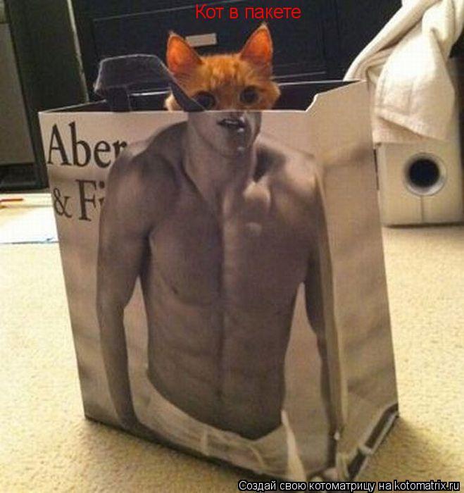Котоматрица: Кот в пакете