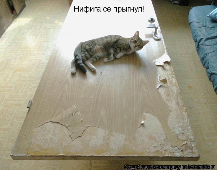 Котоматрица: Нифига се прыгнул!