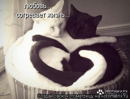 Котоматрица: любовь... согревает жизнь...