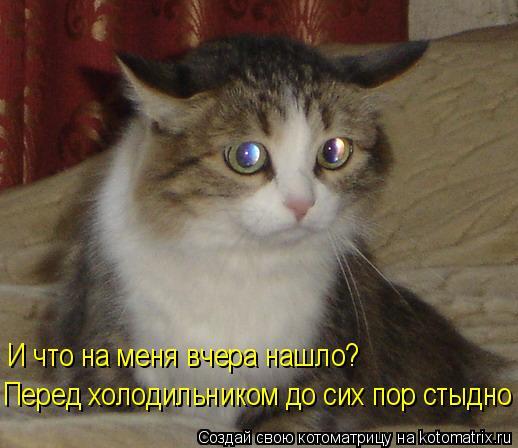 Лучшие котоматрицы недели.  Начало апреля, а на сайте нет котоматриц, не дело.  Предлагаю подборку свежих котоматриц.