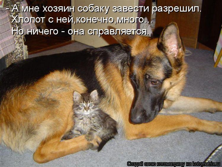 Котоматриця!)))) - Страница 7 898269