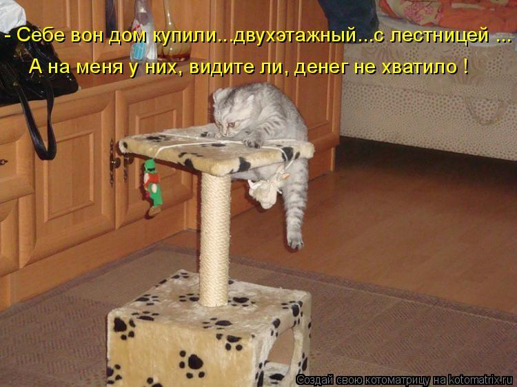 Котоматрица: - Себе вон дом купили...двухэтажный...с лестницей ... А на меня у них, видите ли, денег не хватило !