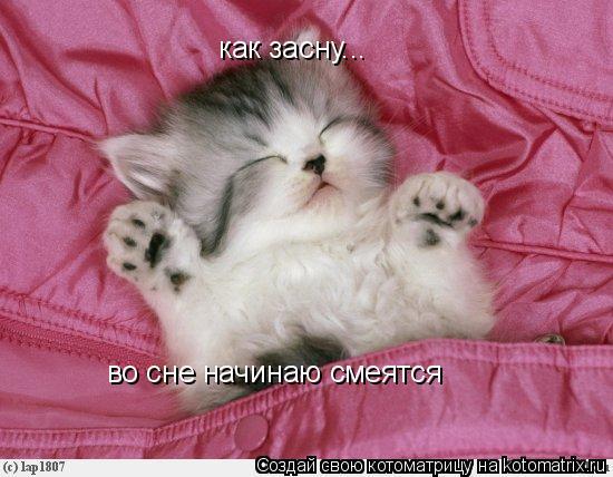 Котоматрица: как засну... во сне начинаю смеятся