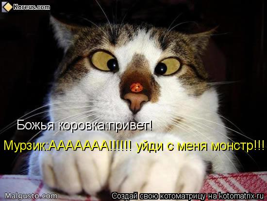 Котоматрица: Божья коровка:привет! Мурзик:ААААААА!!!!!! уйди с меня монстр!!!