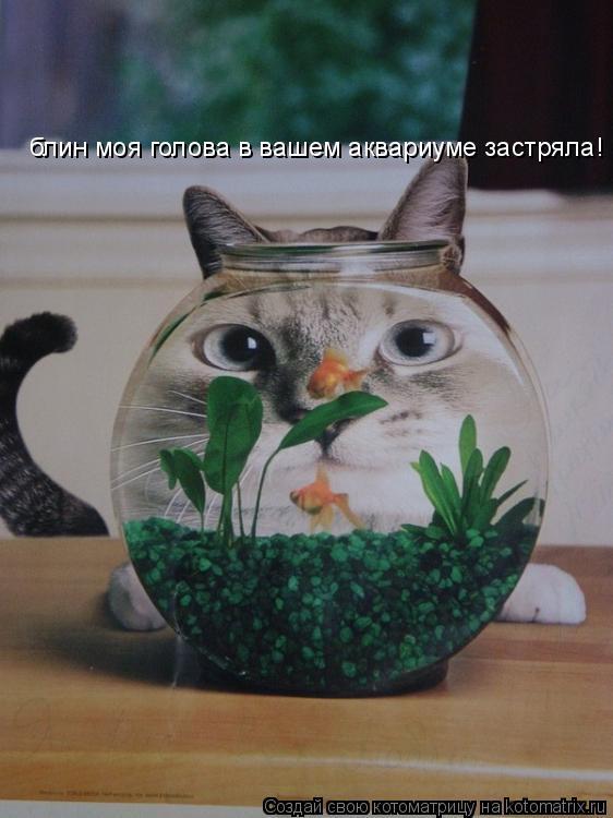 Котоматрица: блин моя голова в вашем аквариуме застряла!