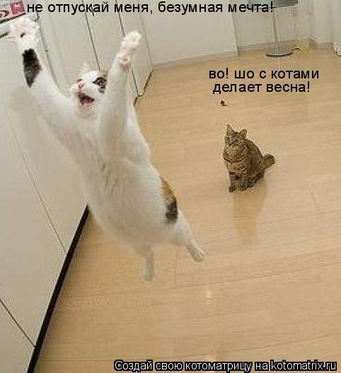 Котоматрица: не отпускай меня, безумная мечта! во! шо с котами  делает весна!