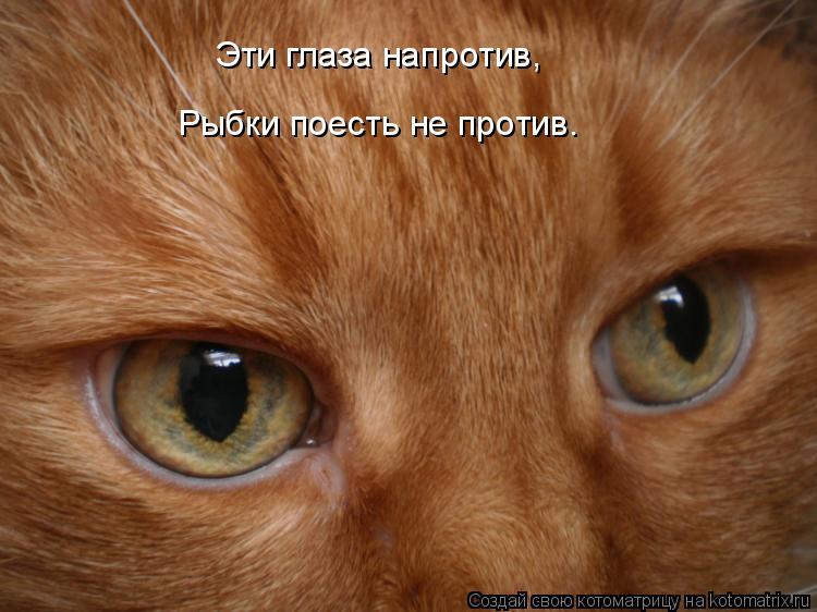 Котоматрица: Эти глаза напротив, Рыбки поесть не против.
