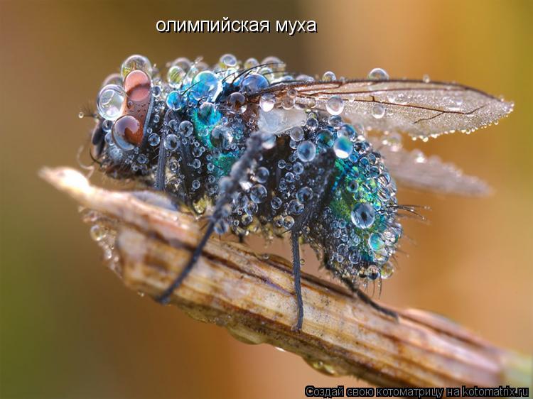 Котоматрица: олимпийская муха