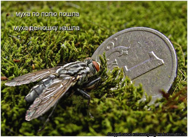 Котоматрица: муха по полю пошла муха денюшку нашла