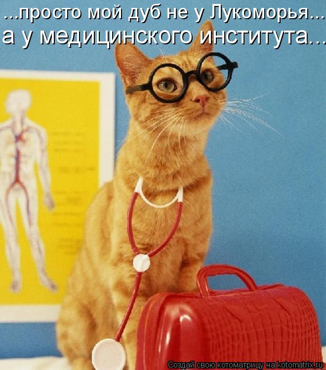Котоматрица: ...просто мой дуб не у Лукоморья... а у медицинского института...
