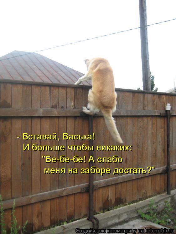 """Котоматрица: - Вставай, Васька!    И больше чтобы никаких:   """"Бе-бе-бе! А слабо    меня на заборе достать?"""""""