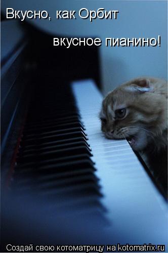 Котоматрица: Вкусно, как Орбит   вкусное пианино!