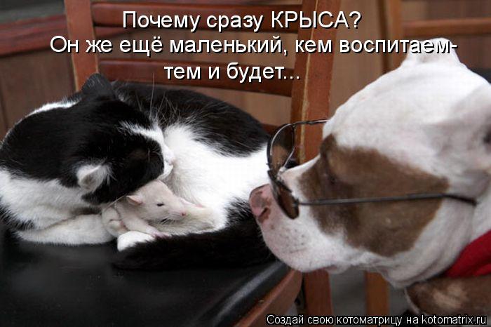 http://kotomatrix.ru/images/lolz/2011/05/03/899257.jpg