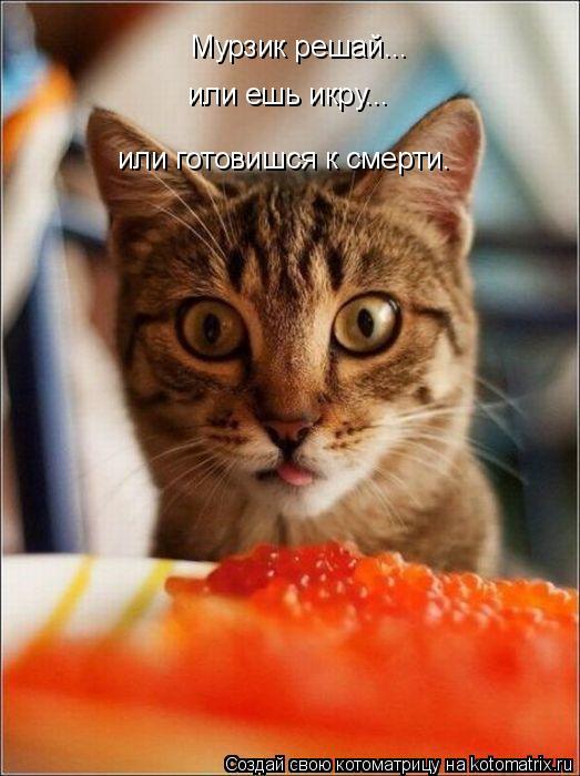 Котоматрица: Мурзик решай... или ешь икру... или готовишся к смерти.