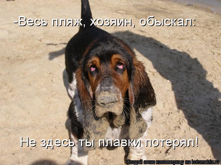 Котоматрица: -Весь пляж, хозяин, обыскал: Не здесь ты плавки потерял!