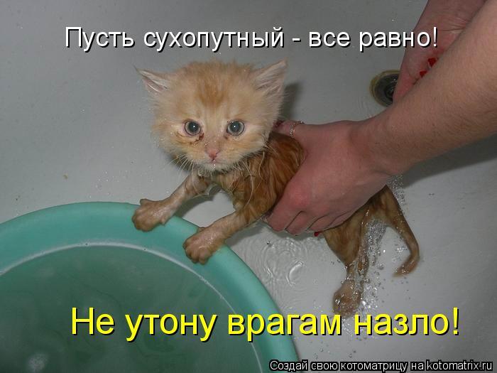 Котоматрица: Пусть сухопутный - все равно! Не утону врагам назло!