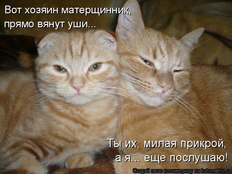 Котоматрица: Вот хозяин матерщинник,  прямо вянут уши... Ты их, милая прикрой, а я... еще послушаю!