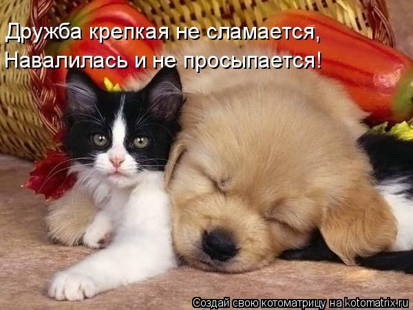 Котоматрица: Дружба крепкая не сламается, Навалилась и не просыпается!