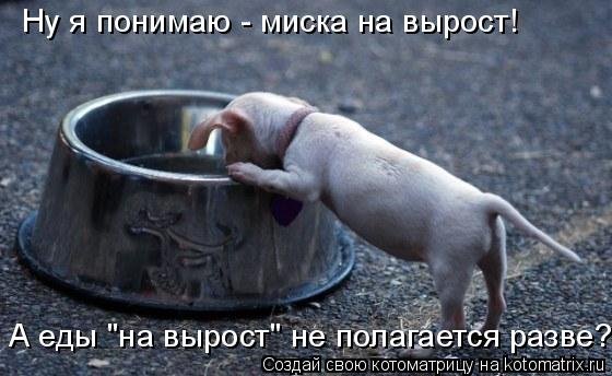 Котоматрица - Ну я понимаю - миска на вырост! А еды