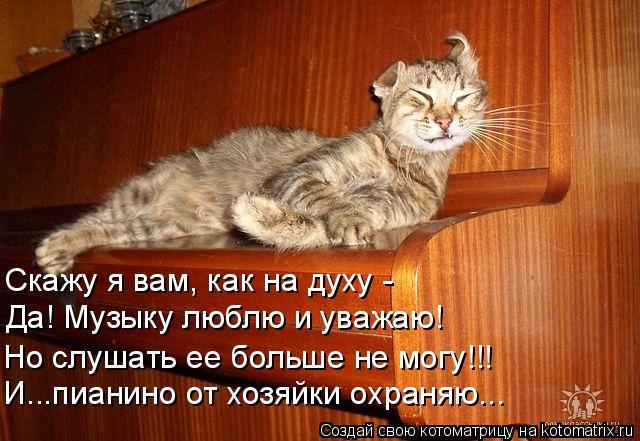 Котоматрица: Скажу я вам, как на духу - Да! Музыку люблю и уважаю! Но слушать ее больше не могу!!! И...пианино от хозяйки охраняю...