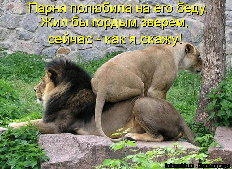 Котоматриця!)))) - Страница 6 899888