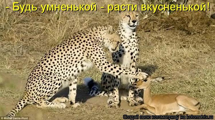 Котоматриця!)))) - Страница 7 899960