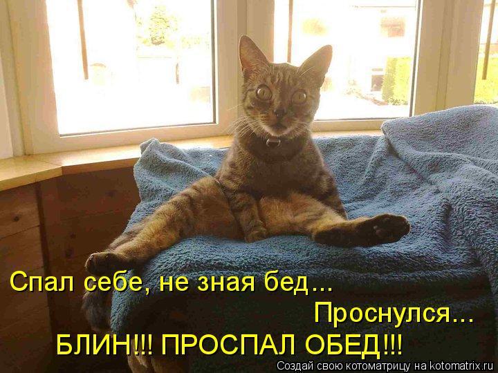 Котоматрица: Спал себе, не зная бед... Проснулся... БЛИН!!! ПРОСПАЛ ОБЕД!!!