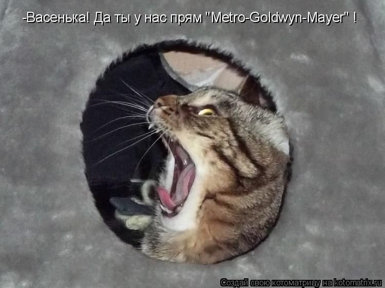 """Котоматрица - -Васенька! Да ты у нас прям """"Metro-Goldwyn-Mayer"""" !"""