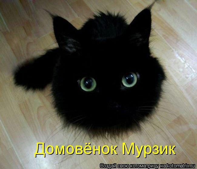 Котоматрица: Домовёнок Мурзик