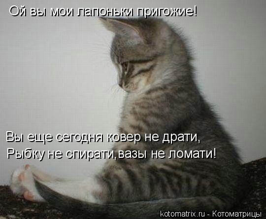 Котоматрица: Ой вы мои лапоньки пригожие! Вы еще сегодня ковер не драти, Рыбку не спирати,вазы не ломати!